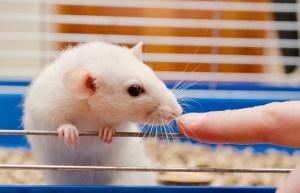 Using THC to Regenerate Brain Cells - CBD Testers