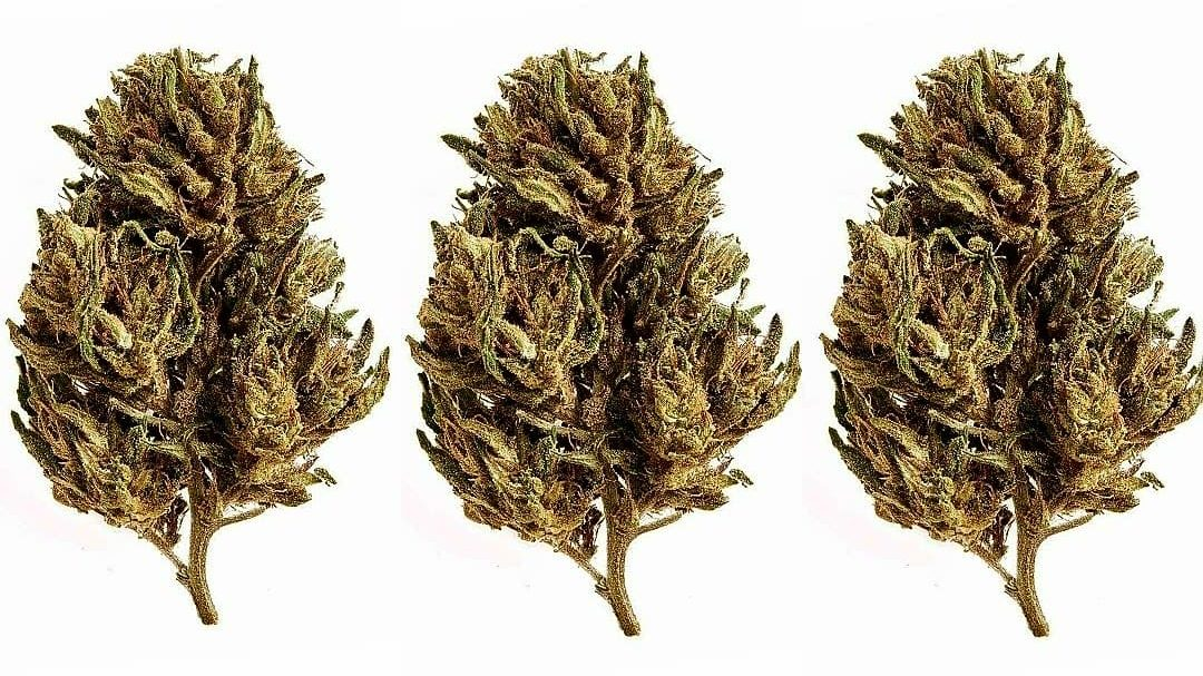 Cannabis and cannabinoids are increasingly used for treating mental problem