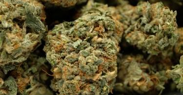 smoking cbd flowers