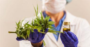 medical cannabis europe