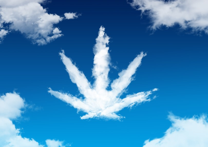 cannabis in the sky