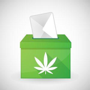 cannabis referendum