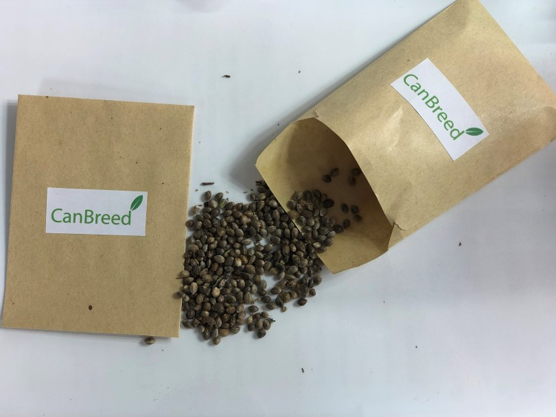 CanBreed's genetically uniform Cannabis hybrid seeds