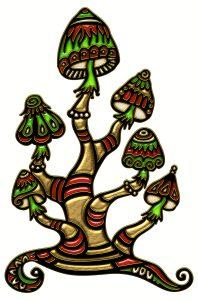 Magic Mushrooms Mexico