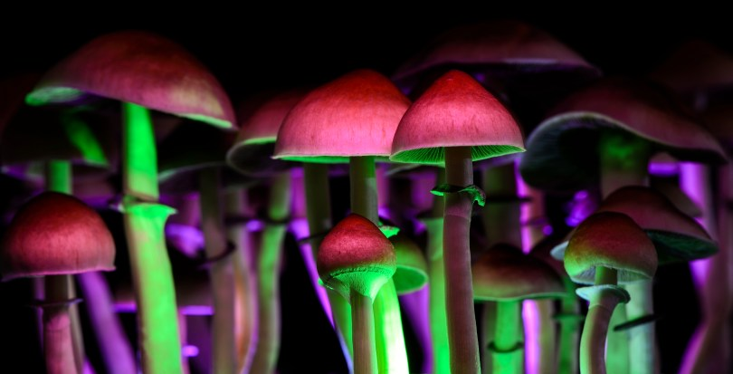 magic mushrooms loophole