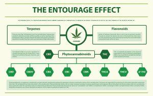 CBN entourage effect