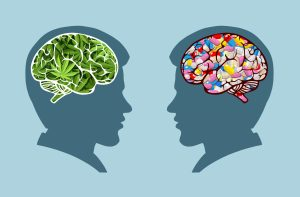cannabis over opiates