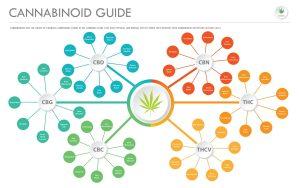 minor cannabinoids