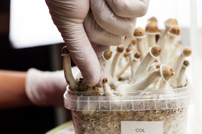 magic mushrooms heal brain