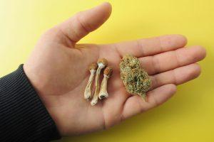 DEA wants marijuana psilocybin