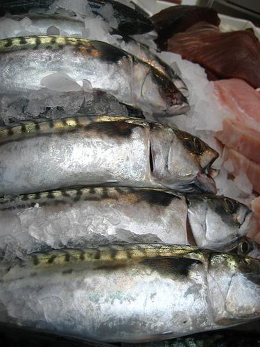 Mackerel on ice (Used by permission of Jeremy Keith.)