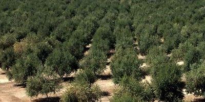 Aceite de oliva: tipos, variedades y sabores