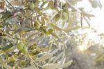 ¿Cuál es el cultivo más rentable en España?
