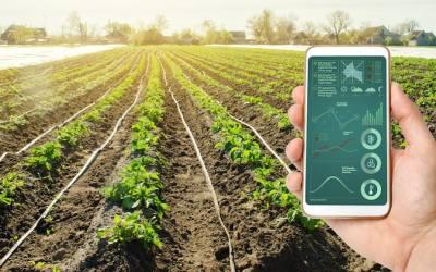 Agricultura intensiva: en qué consiste y cuáles son sus ventajas