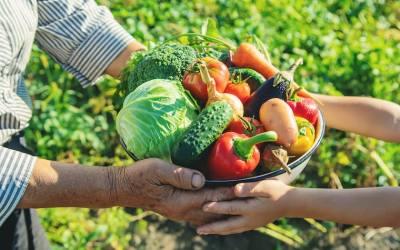 Qué es la agricultura de subsistencia y cuál fue su origen