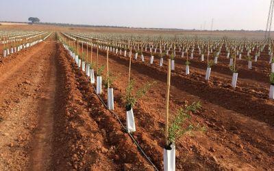 El marco de plantación