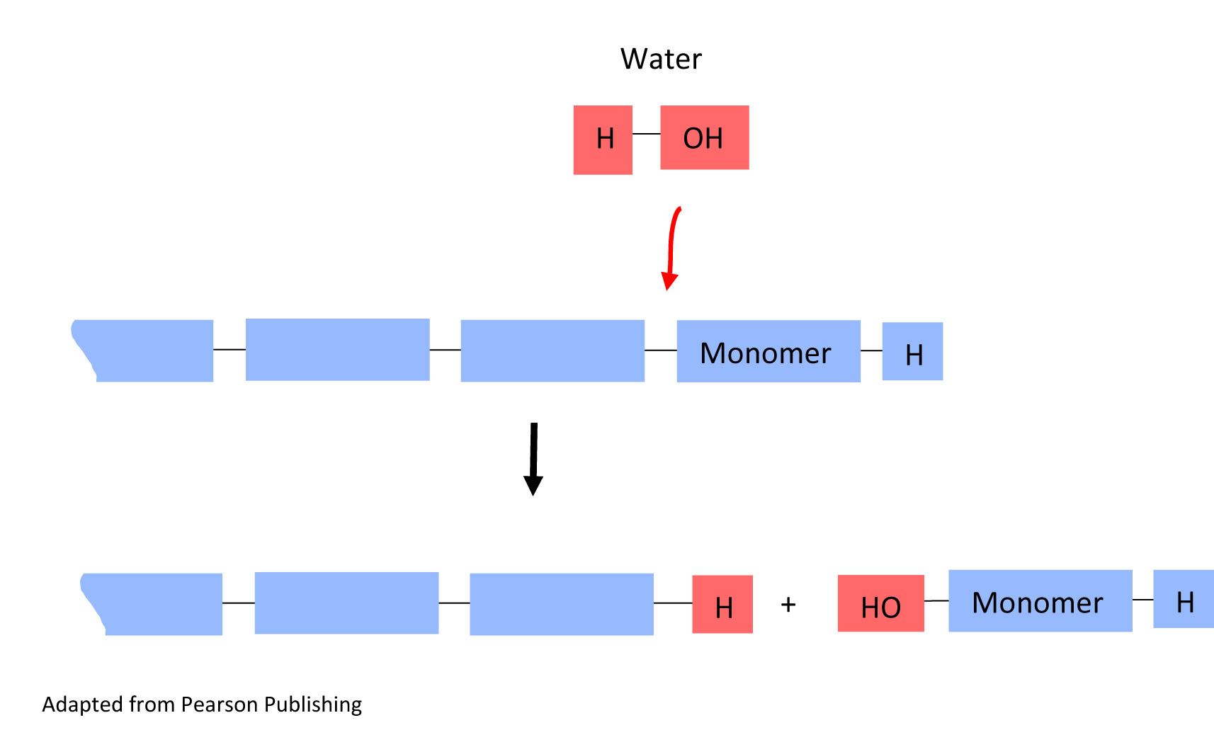 Molecules Of Life And Water