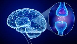 Human brain and Active Cannabinoid receptor