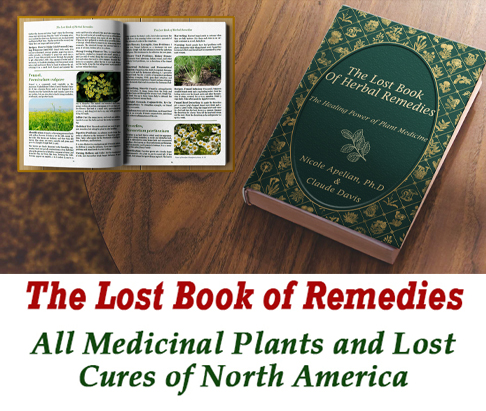Lost Book Of Herbal Medicines Banner