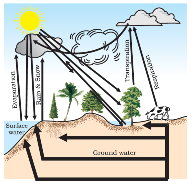 Water Cycle in Nature