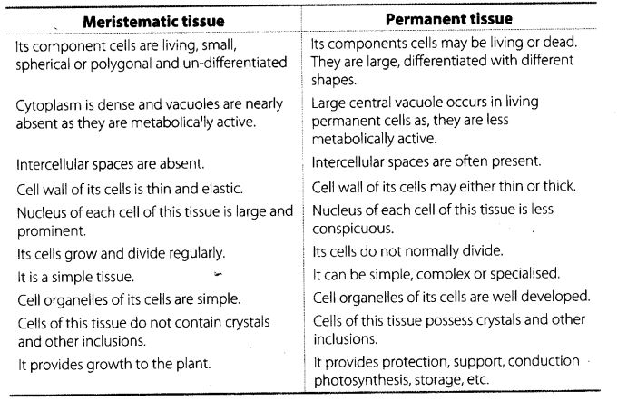 Difference Meristematic and Permanent