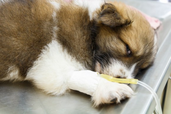 The 7 foods most likely to make your pet sick - CBS News