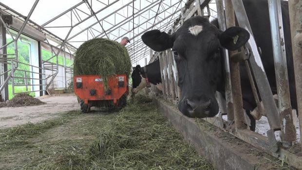 timothy-demeree-dairy-farm-in-little-fals-ny-620.jpg