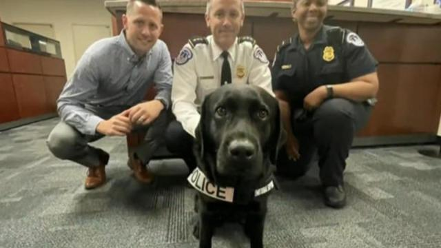 , Support dog provides comfort to Capitol Police, The Evepost National News