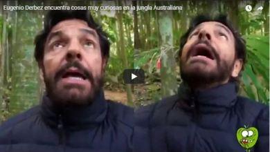 Photo of VIDEO: Derbez se aterra al estar cerca de unos «árboles asesinos»