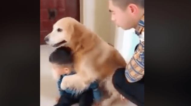 VIRAL: Perro defiende a un niño que era regañado por su padre