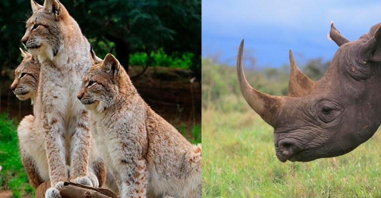 La tierra entró en la sexta extinción masiva de especies por culpa del ser humano