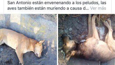 Photo of Envenenan Animales en fraccionamiento Arko San Antonio