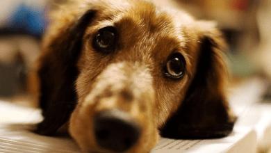 Photo of Estudio revela que gritarle a los perros genera daños en su salud mental