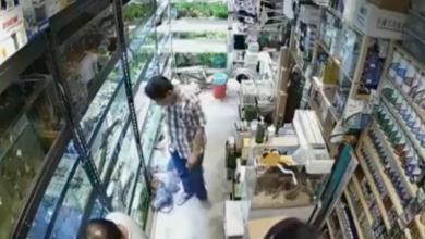 VIDEO: Captan a hombre envenenando a peces en tienda de mascotas