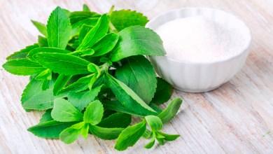La Stevia es 200 veces más dulce que el azúcar