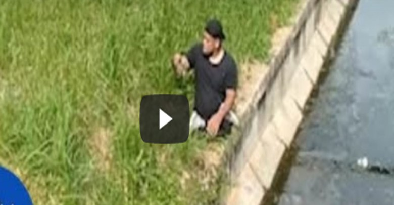 Video: Atleta paralímpico deja su silla de ruedas para salvar gatito