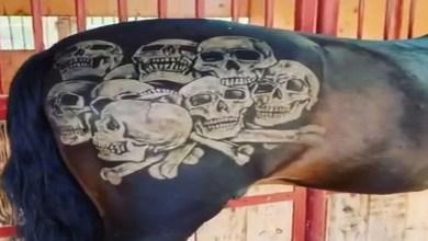 Pepe Aguilar es atacado en redes por presuntamente tatuar a su caballo