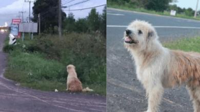 Perro se pierde y espera a su familia durante cuatro años en una carretera
