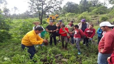 Supera Programa Municipal de Reforestación 2019 meta de 240 mil árboles