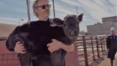Photo of Joaquín Phoenix rescata a vaca y a su cría de un matadero en L.A