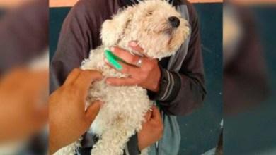 Photo of Joven roba un perro para regalárselo a su novia por San Valentín; fue detenido