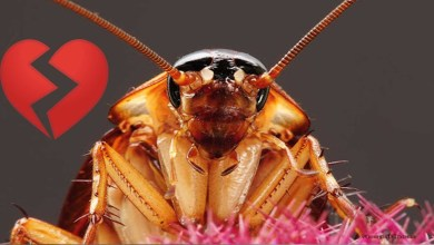 Photo of Zoológico está permitiendo bautizar cucarachas con el nombre de tu ex