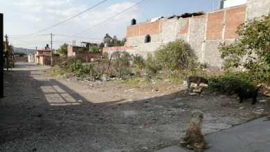 Photo of Calles en la colonia José María Pino Suárez foco de delincuencia
