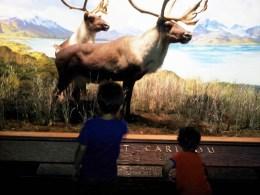Metropolitan Museum Caribou
