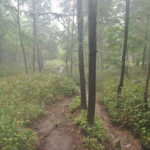 Born Trail