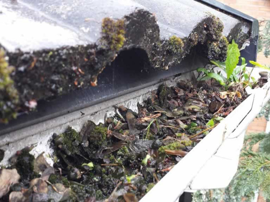 Shropshire Gutter Cleaning Emptying And Unblocking Services