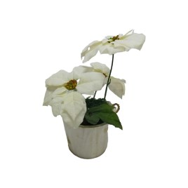 White Christmas Flower in Country Wooden Pot (S)