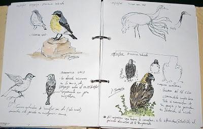 Cuaderno de campo del Blog Imágenes de la naturaleza, de José Gordillo Caballero