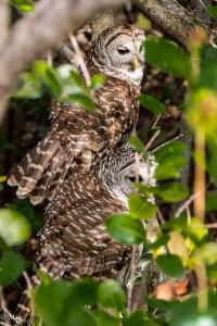 Pair nesting