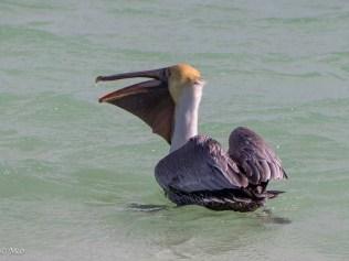 Pelican pouch